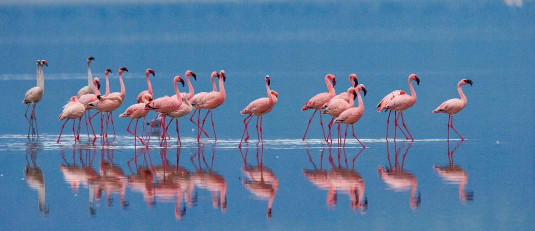 Flamingo Feminista